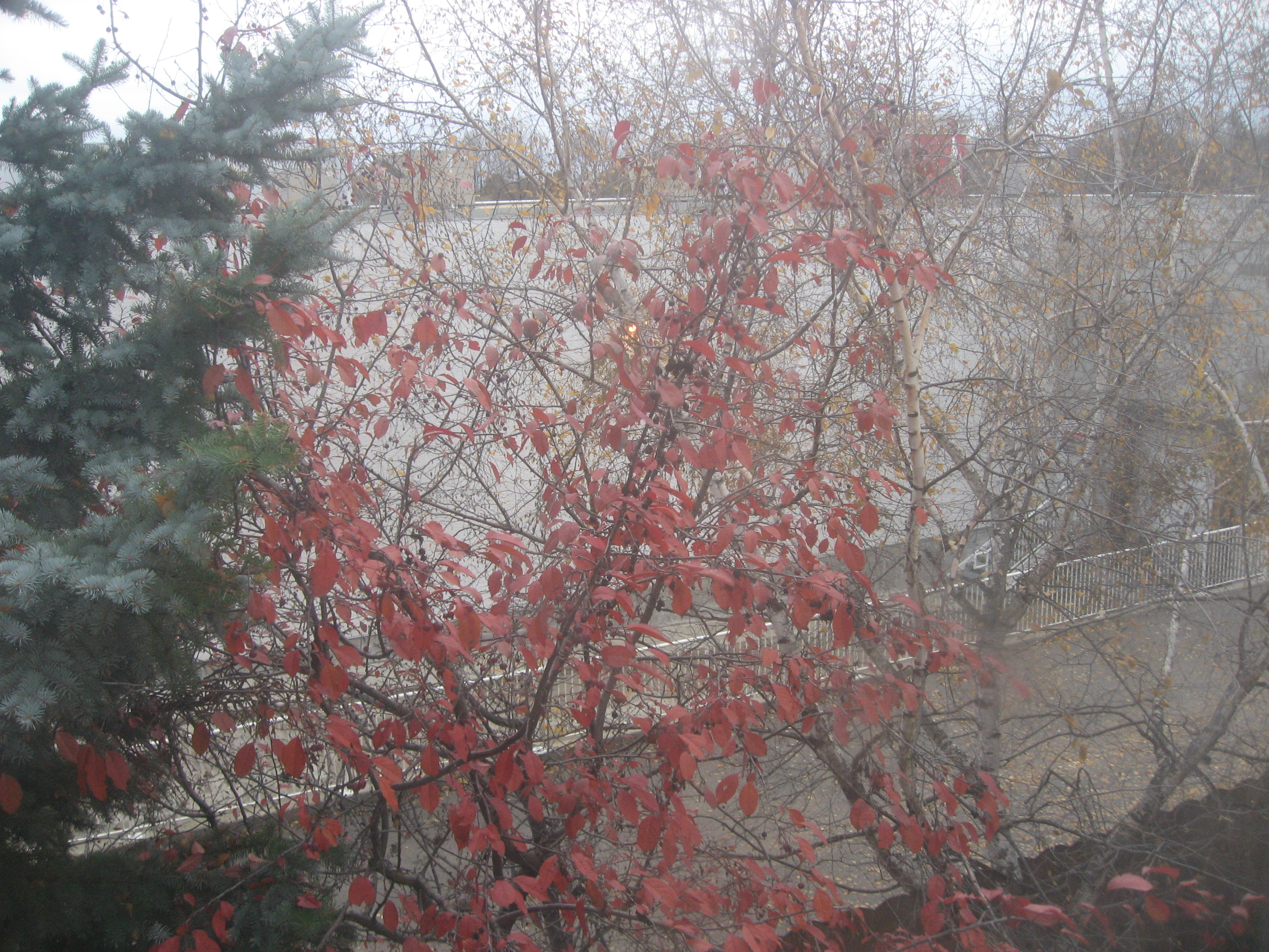 red-leaves-2