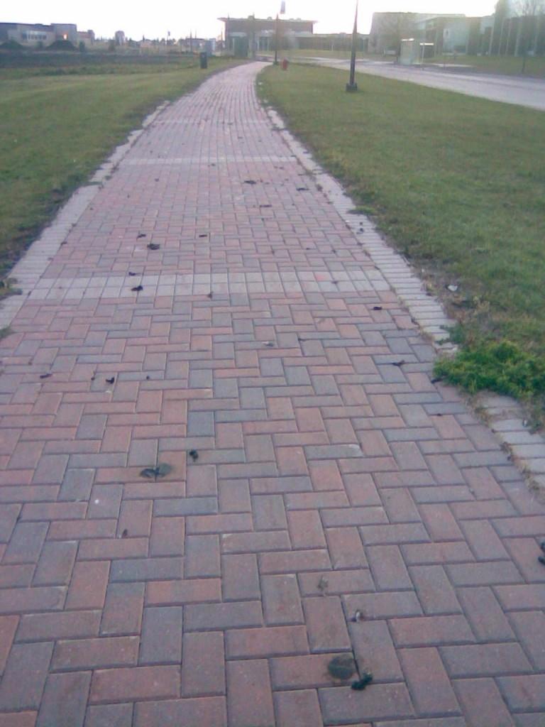 铺满了屎的走道