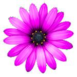 Textmate2 icon
